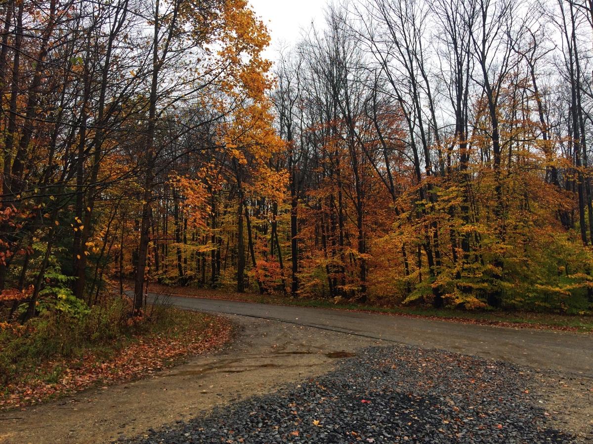 The Tail-End of Leaf Peeping Season: Pennsylvania & NewYork